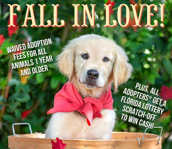 Fall in Love this Weekend - Adoption Fees Waived for Pets One Year & Up