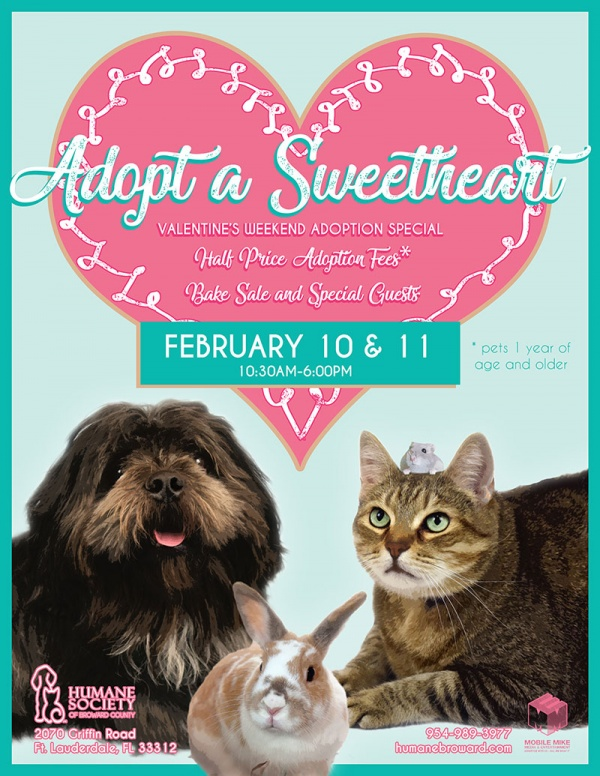 Meet Your Sweetheart at the Humane Society of Broward County