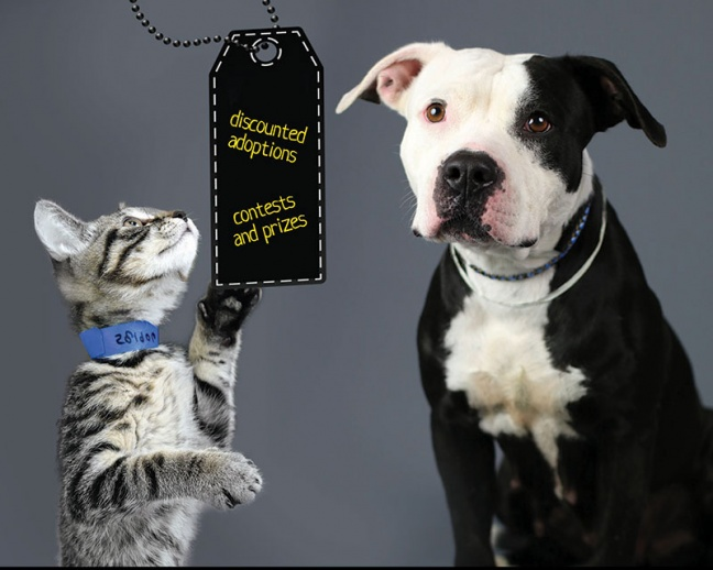 Black Friday Pet Adoption Event! Join us on Friday, November 24