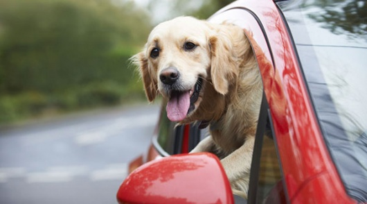Traveling with your Pet? Here are 5 Tips to Consider Before Hitting the Road!