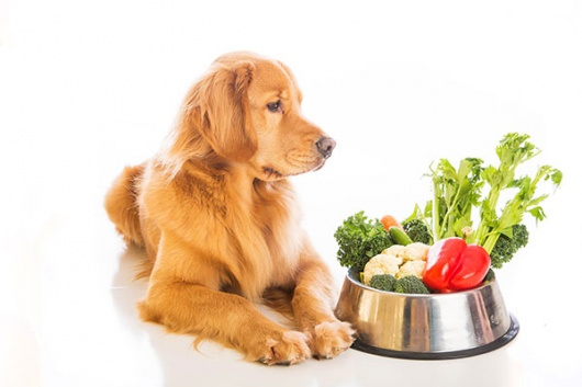 5 Ways to Keep Pets Healthy Through the Holidays