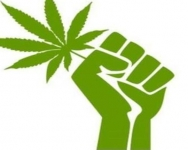 Broward Commissioners Discuss New Law for Marijuana Possession