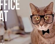 Seeking Temporary Employment as Office Cat